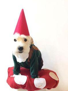 Dog Gnome Costume