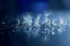 Feeble dancers by Lafugue Logos on 500px