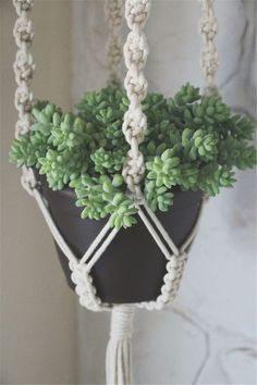 First Giveaway macrame plant hanger and succulentmacrame plant hanger and succulent Macrame Plant Hanger Patterns, Free Macrame Patterns, Macrame Plant Holder, Plant Holders, Crochet Plant Hanger, Pot Hanger, Macrame Projects, Crafty Craft, Diy Crafts