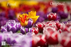 How to Change Colors in Photoshop Elements