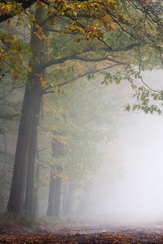 Trees in the morningmist by Bas Lammers, Netherlands, via Flickr