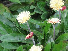 wunderschöne Blumen in herbstlichen Farben, entdeckt auf dem #BUGA-Gelände #Premnitz