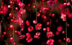 #flores ♥