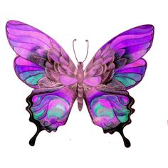 Ette's Butterfly - CSI for Poly ❤ liked on Polyvore featuring butterflies, animals and purple