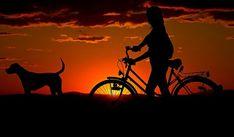 Dog Behavior Series - What is the best dog food? Best Dog Food, Best Dogs, Small Town Business Ideas, Image Sharing Sites, Mental Health Benefits, Fake Smile Quotes, Dog Behavior, Your Dog, Display