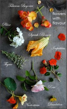 Edible flowers. Edible flowers. Some examples of flowers that you can use in your cooking. Make you you wash them well to make sure there are no critters in your dinner. Its worth the small amount of prep.
