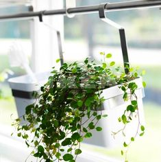 Ikea Grundtal planter for kitchen windowsill herbs via Gardenista
