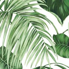 Transform your space with our wallpaper wall mural featuring a green tropical leaf motif against a white backdrop. Easy to position and reposition during installation, it's a bold way to easily refresh a room with a relaxed, island-inspired vibe. Green Leaf Wallpaper, White Wallpaper, Wall Wallpaper, Leaves Wallpaper, Green Leaves, Plant Leaves, Attic Master Bedroom, Jungle Room, Room With Plants