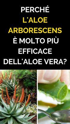 Growing Vegetables, Ayurveda, Aloe Vera, Herbs, Health, Fitness, Food, Chromotherapy, Salud