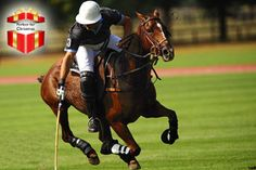 2 or 3-Day Luxury Polo Retreat