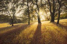 ADAIR PAYNE - Portfolio, Summer Solstice, 8 x 12