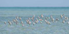 Do You Know Where the Birds Go? | Audubon