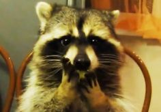 Aww. The Cutest Animal Videos Of 2013 Will Melt Your Heart.
