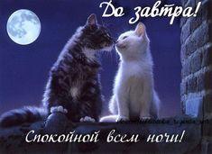 Спокойной всем ночи