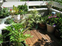 Coole Ideen für Balkon Pflanzen - sonnig
