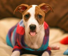 Bialy the Mixed Breed-Special rescue story!!!