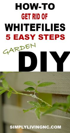 DO YOU HAVE WHITEFLIES ON YOUR GARDEN PLANTS Diy Design, Design Crafts, Plant Pests, Garden Pests, Outdoor Plants, Outdoor Gardens, How To Get Rid, How To Remove, Raised Garden Beds