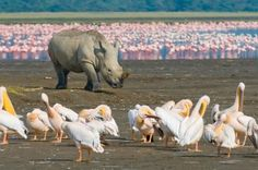 Hells Gate and Lake Naivasha Guided Day Tour from Nairobi Enjoya day tour visiting Hell's Gate National Park, the only park where you can drive, walkanddo some cycling within thePark then spice up your excursion with a boat ride in Lake Naivasha where you get a chance to spotthe big hippos on the shores of the lake and different species of water bird.Depart your Nairobi Hotel 7am and drive to the Hells Gate NationalPark with stops atview points to marvel at thescenic ...
