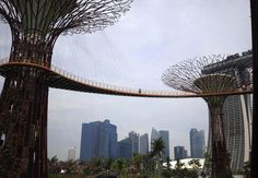 The Supertrees of Singapore.