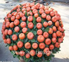 20 unids fruta comestible mandarín semillas de árboles bonsai, Citrus Bonsai mandarina semillas(China (Mainland))