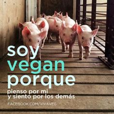 Soy VEGAN porque pienso por mi y siento por los demás. Miss My Best Friend, Amor Animal, Vegan Quotes, Open My Eyes, Stop Animal Cruelty, Faith In Humanity, Vegan Lifestyle, Animal Rights, Going Vegan