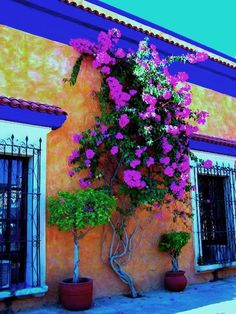 Bougainvillea-these colors are inspiring.