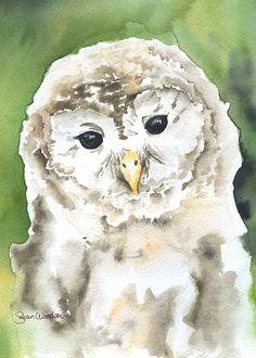 Barred Owl watercolor giclée reproduction. Portrait/vertical orientation. Printed on fine art paper using archival pigment inks. This quality printing allows over 100 years of vivid color in a typical