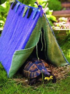 Yes, I would like a turtle tent in my garden.