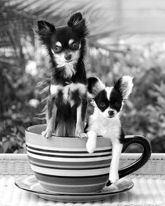 double shot of java....too cute