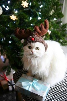 Cat in a hat Maybe if I dress a cat up like this my dad won't be allergic to it because technical it is a reindeer..