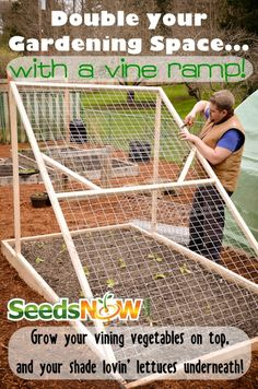 Cucumber Vine Ramp, Lettuce, Gardening Spaces, Non-GMO, Organic