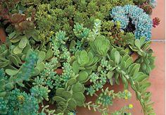 Um tacho de suculentas é uma boa sugestão para quem não tem muito tempo para cuidar das plantas. Essas espécies são de fácil cuidado, podem ficar a pleno sol e necessitam de pouca água