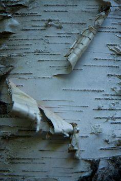 birch bark....white & brown :)