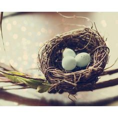 nesting photograph baby nursery decor robins egg blue pale mint blue... ($19) ❤ liked on Polyvore