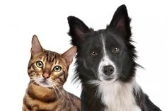 The Lowdown on Pet Urine and Feces - Strawfield Pets Dog Clinic, Feline Leukemia, Cheap Pets, Pet Urine, Best Pet Insurance, Insurance Companies, Horses And Dogs, Healthy Pets, Animal Facts