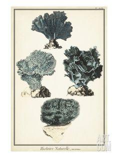 Coral Species I Art Print at Art.com