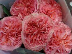 #Sprayrose # Rosa # Glory Days Available at www.barendsen.nl