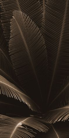 Plant Wallpaper, Phone Screen Wallpaper, Iphone Background Wallpaper, Dark Wallpaper, Tumblr Wallpaper, Flower Wallpaper, Aesthetic Backgrounds, Aesthetic Iphone Wallpaper, Aesthetic Wallpapers