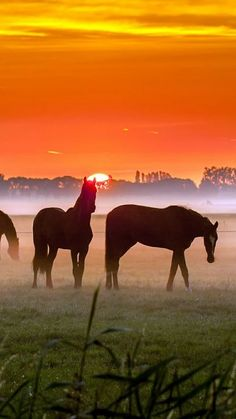 Horse photography - Beautiful horses at sunset. by lea Horse Photos, Horse Pictures, Animal Pictures, All The Pretty Horses, Beautiful Horses, Animals Beautiful, Simply Beautiful, Wilde Mustangs, Animals And Pets