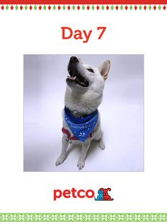 Here is today's 12 Days of Pinterest featured image (12/9/2012). Pin this Doggy Hanukkah Bandana image to one of your boards for a chance to win a 500 dollar Petco shopping spree, plus 500 dollar Petco Gift Card for a Petco Foundation Shelter/Rescue of your choice. Winner will be announced tomorrow (12/10/2012) between 12 pm and 5 pm Pacific time.