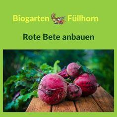 Anbauanleitung für rote Bete in Deinem Garten. #roteBeteAnbau #roteBeteimGarten #selbstversorger #nutzgarten