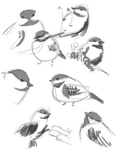 bird sketches by BettyPimm