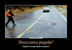 Deszczowa pogoda? – Wyjdź ze swoją rybką na spacer! Wtf Funny, Funny Memes, Polish Memes, Great Memes, Me Me Me Anime, Laugh Out Loud, Haha, Humor, Pictures