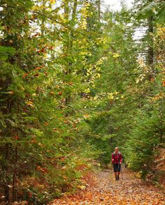 Autumn hiking is right around the corner. Discover Nordic Fitness Trekking in the golden mountains of British Columbia.