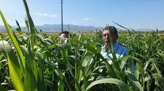 """Mehmet Karlı: """"Pulluksuz tarım, doğal bir toprak reformudur"""""""
