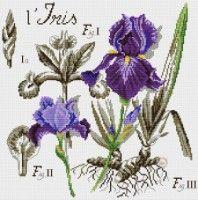 "(100) Gallery.ru / COBECTb - Альбом ""L'Iris"""