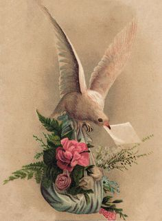 Victorian Graphic - Dove with Roses - The Graphics Fairy