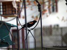 Bird at feeder the morning.