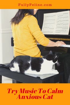 There is a connection between music and cats. Learn more about how certain types of music can help your cat #cats #catlife