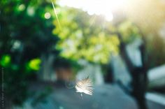 feather of a bird flying in a garden by Lia & fahad | Stocksy United